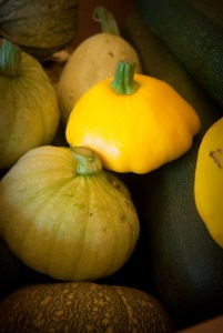 A variety of squash
